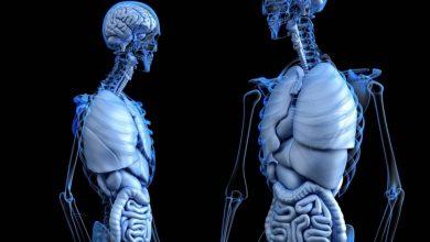 Bild von 'Gutes Cholesterin' kann die Leber schützen: Studie |  Gesundheitsinfo