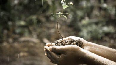 Bild von Kurkuma in Methi: Die zehn besten Lebensmittel, die man während des Monsuns essen sollte |  Gesundheitsinfo
